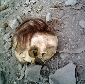 centinela-skull